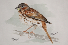 © Bev Mazurick - Fox Sparrow