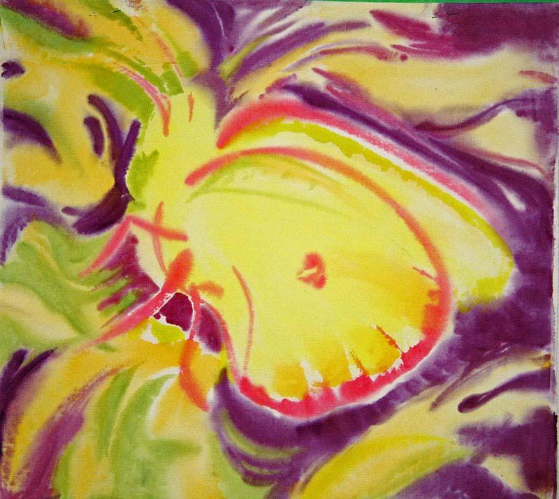 © Bev Mazurick - Yellow Sulphur Butterfly