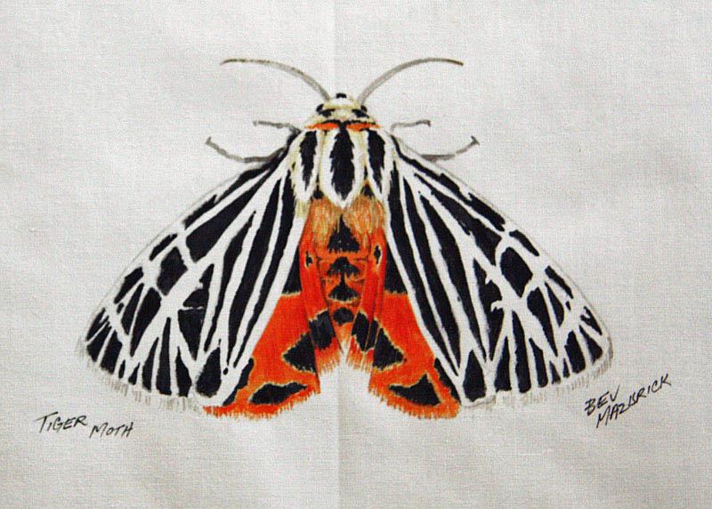 © Bev Mazurick - Tiger Moth