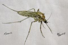 Bev_Mazurick-Mosquito