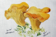 © Bev Mazurick - Yellow Chanterelle