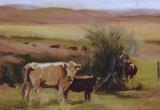 © Bev Mazurick - Cows in Pasture