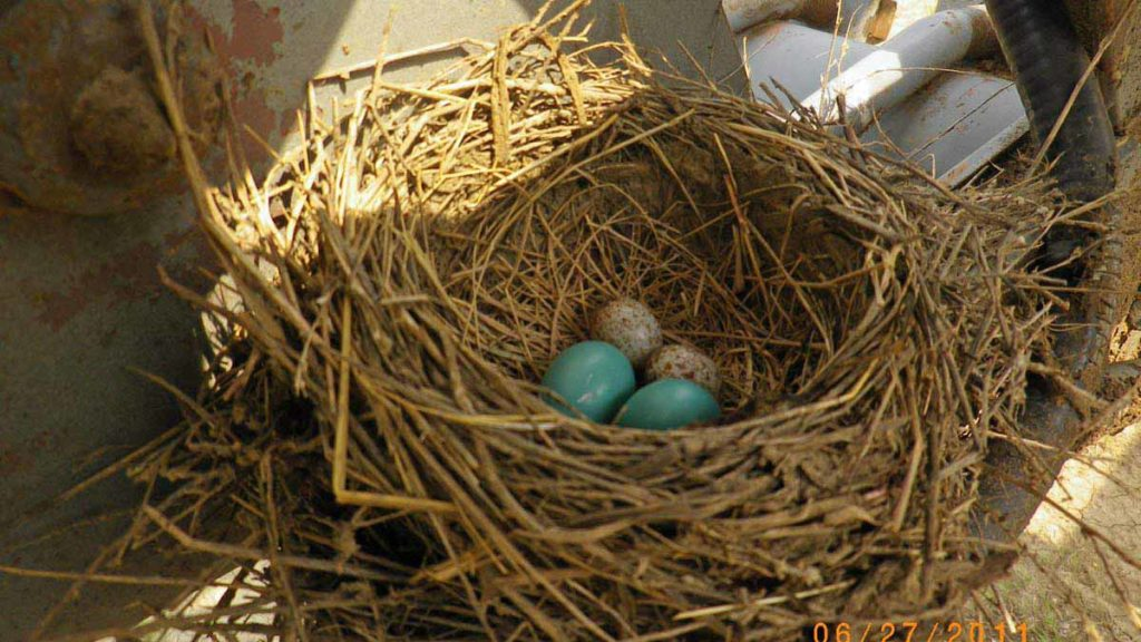 © Bev Mazurick - Eggs in Nest